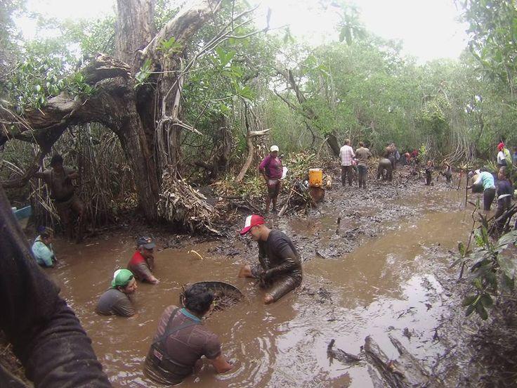 Manglares de Tecolutla, en riesgo por turismo | Expresion de Veracruz