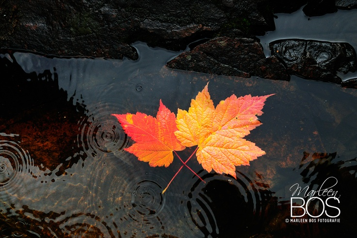 Minnesota autumn ©Marleen Bos Fotografie
