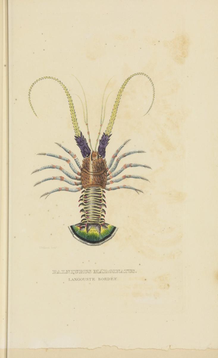 379 besten HND Biol. mar. Crustacés Bilder auf Pinterest | Zoologie ...
