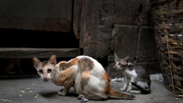 Petition · Non aux interdictions de nourrir les chats errants · Change.org  https://www.change.org/p/non-aux-interdictions-de-nourrir-les-chats-errants