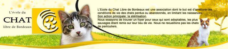 L'Ecole du Chat Libre de Bordeaux . Association dont le but est l'amélioration des conditions de vie des chats abandonnés ou perdus en limitant leurs naissances. Principal but : la stérilisation.    Voir le site  http://www.ecole-du-chat-bordeaux.com/