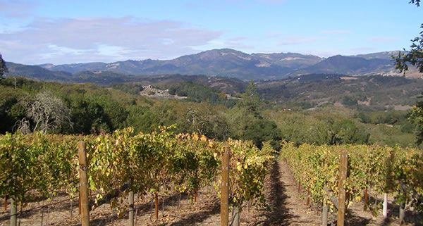 """Wine Country Runs: Enjoy running the picturesque country roads along wineries and vineyards of the Paso Robles wine country. Race includesa half-marathon run or walk, a 5Kand a kids' half-mile """"grape stomp."""" Start and finish at the beautiful River Oaks Hot Springs."""