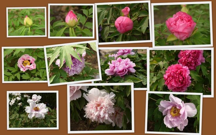 Beauty in Beijing Plant Garden (4)
