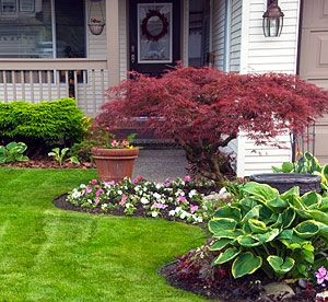 27 best trees bushes and ground cover oh my images on Plants next to front door