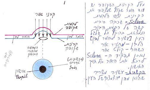 השכבות בחלק האופטי של העין