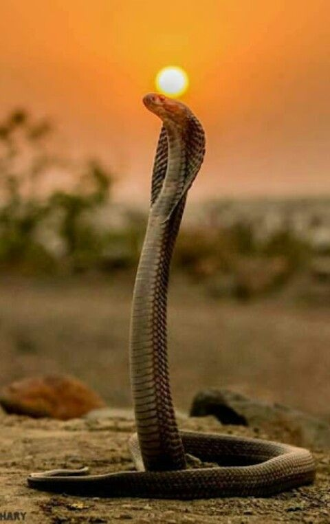 Pin By Isabell Weltzin On Snakes Photography Animals Snake