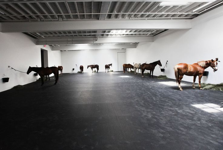 """Jannis Kounellis's """"Untitled (12 Horses)""""   Twelve live horses tethered to gallery walls highlight the brute power of art and its ability to transform space."""