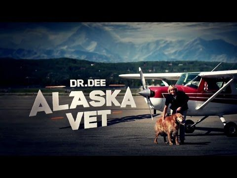 DR. DEE: ALASKA VET Takes Flight on Animal Planet Tonight! (Video Preview) | TVRuckus