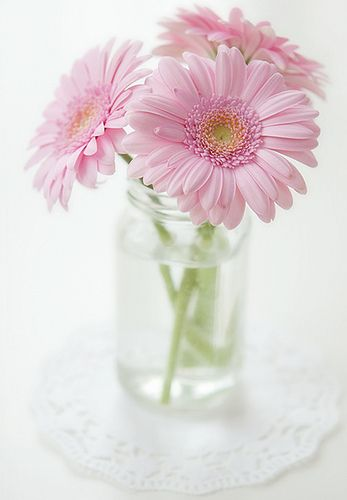 Gerbera Daisies These mean innocence, purity and cheerfulness. Probably best used as a gift for a close friend