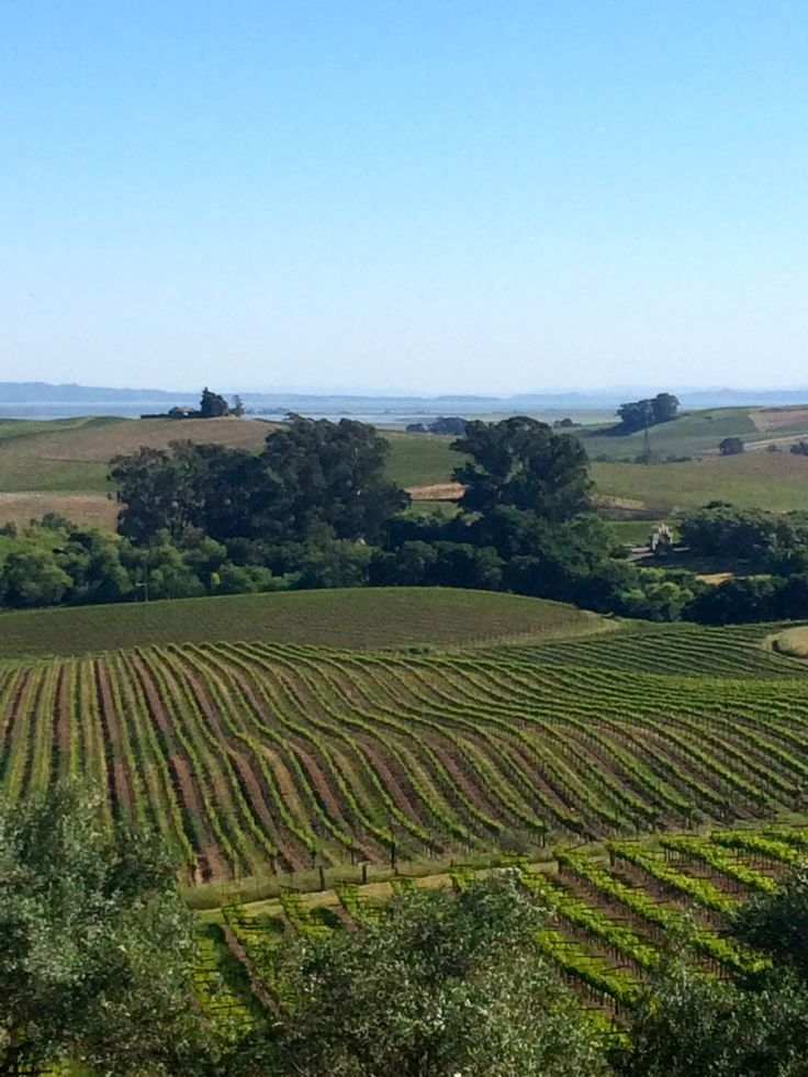 Five of the best wineries in the Napa and Sonoma California wine countries.  Inspiration to start planning your trip.