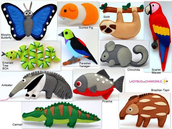 South American And Amazon Rainforest Animals Tropical Rainforest
