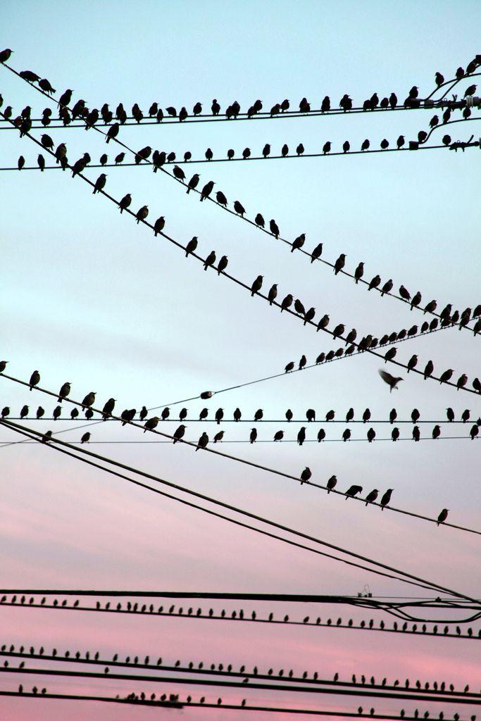 Birds On The Wire by Faith Alexandra