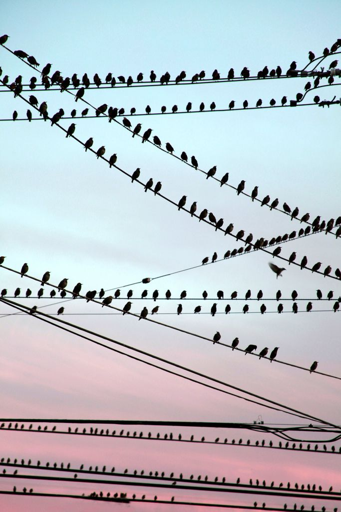 My parents used to always call this bird church because there's always one bird by itself that acts like the preacher.  ;)