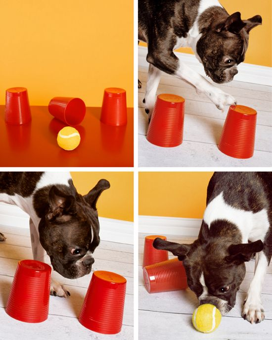 Magic cups game for dogs