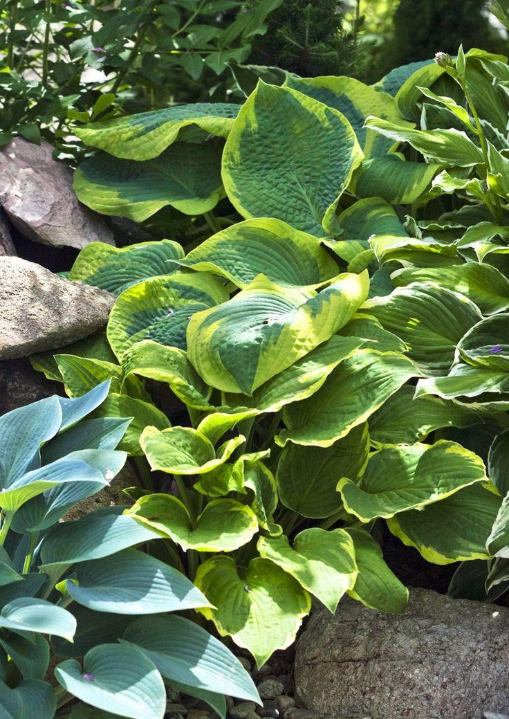 Torstin työuupumus vaihtui puutarhan rakentamisen myötä pikkuhiljaa elämäniloksi ja harmoniaksi. Japanilaistyylistä puutarhaa kaunistuttavat paitsi kasvit, myös kivet sekä itse rakennetut puurakenteet.