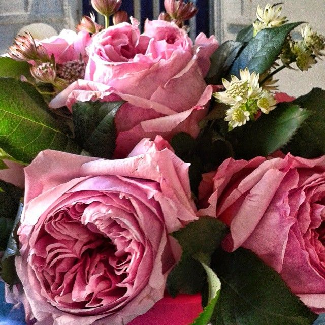 David Austin roses and Flowers Papadakis