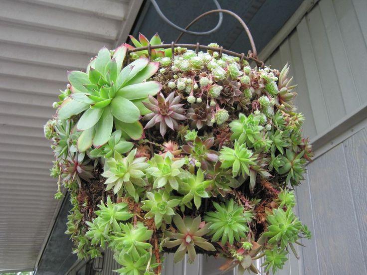 66 besten vir gok erk lyre bilder auf pinterest for Dekor von zierpflanzen