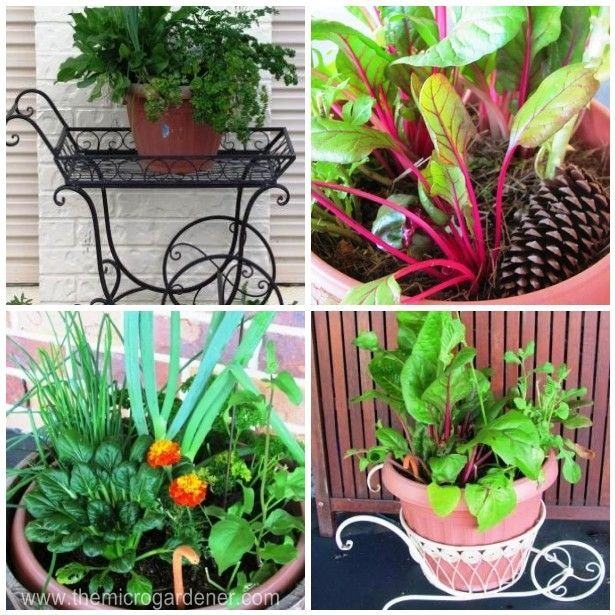 The Micro Gardener