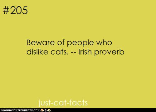 Beware of people who dislike cats...