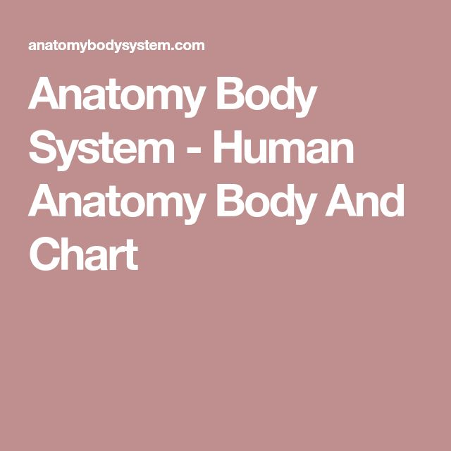 Best 25+ Human anatomy chart ideas on Pinterest Human anatomy - muscle chart template