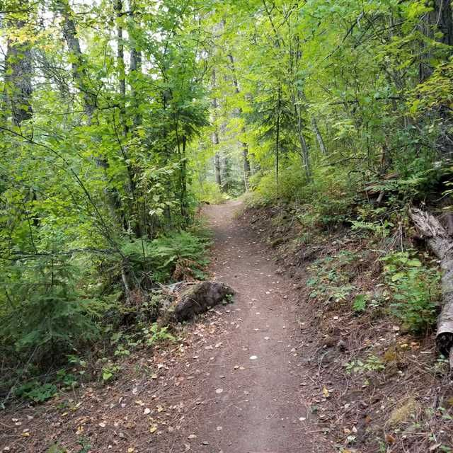 Hiking Trail In A Forest Surrounded By Greenery With A Glow Of Sunshine Stock Photo By Korkyspins Download Images And Pictures From Hiking Trails Trail Hiking