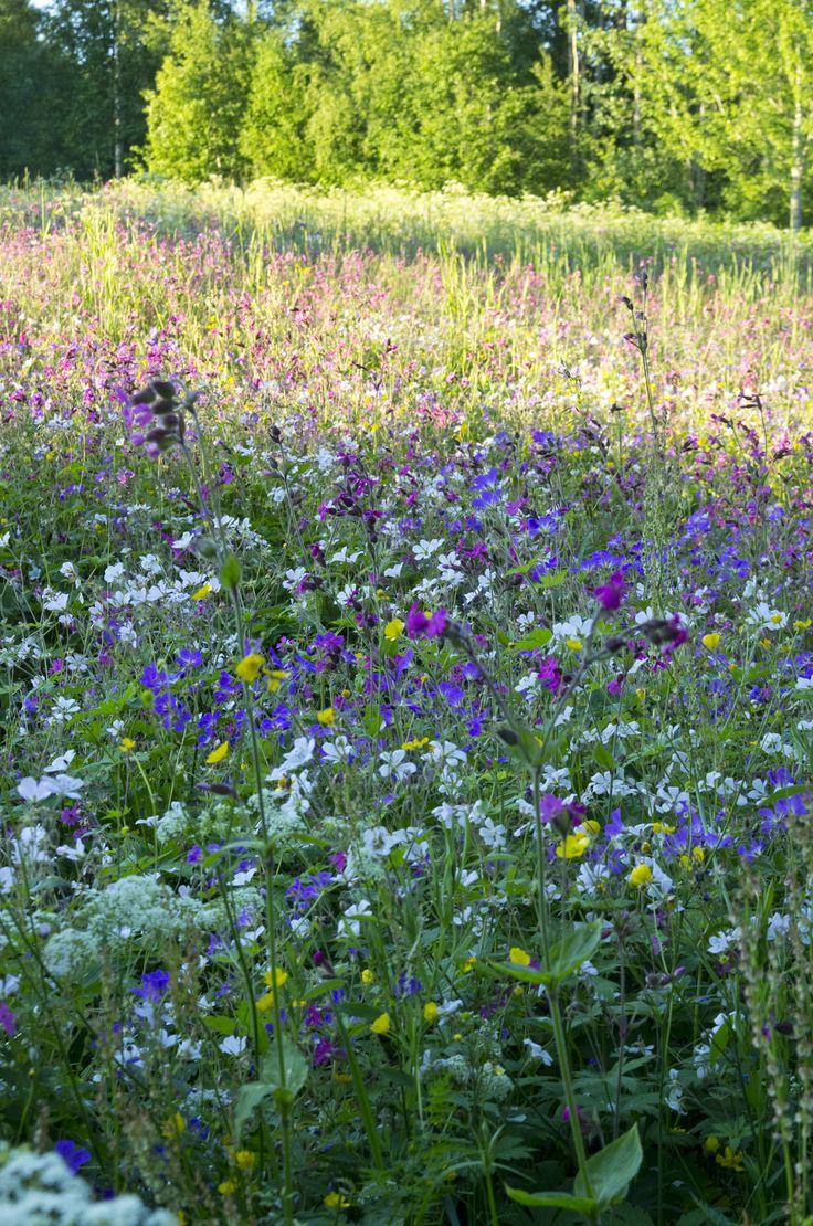 Meadow, Hälsingland, Sweden. Photo Sophia Callmer