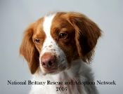 2016 NBRAN Calendar - great gift or stocking stuffer for the brittany spaniel animal lover. Purchase goes toward rescue! #pets, #dogs
