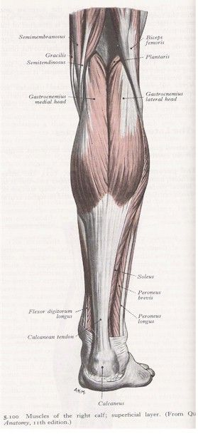 17 Best images about Contracture on Pinterest | Night ...