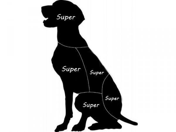 Steicheln: Hunde Mögenu0027s überall Hundebesitzer Müssen Nicht Ganz So  Vorsichtig Sein: Sie Erwarten Keine