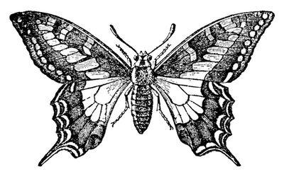 Free Vintage Digital Stamp - Pretty Butterfly