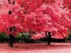 arboles rosados *-*