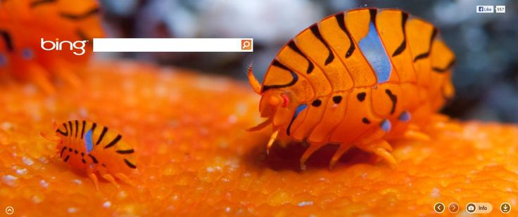 1000 Images About R4 N8ow On Pinterest: 1000+ Images About Bing Daily On Pinterest