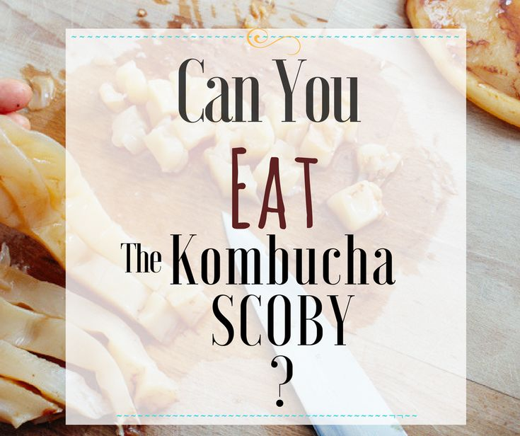 shares Today we are going to talk about the controversial topic of eating SCOBYs! The eating of SCOBYs is often listed under 'What to do with extra SCOBYs' as a good way to use up superfluous SCOBYs. While the adventurous kombucha makers who love their SCOBYs are keen to experiment, there are others who term...Read More