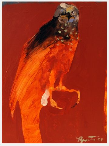 a gorgeous Bartow hawk