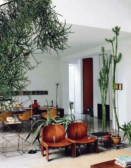 Living The Cactus Life Plants Are As Important Furniture Home Of Maurizio Zucchi Mr Is From Company