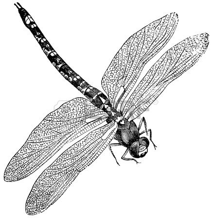 Vintage engraved illustration of a dragonfly isolated against white Stock Illustration