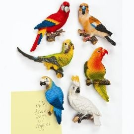 vibrant collection of six stunning birds #Magnamail