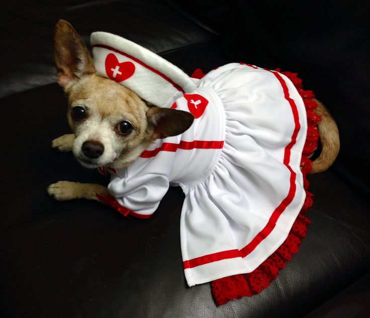 51 best dog halloween costumes images on Pinterest | Animals, Pet ...