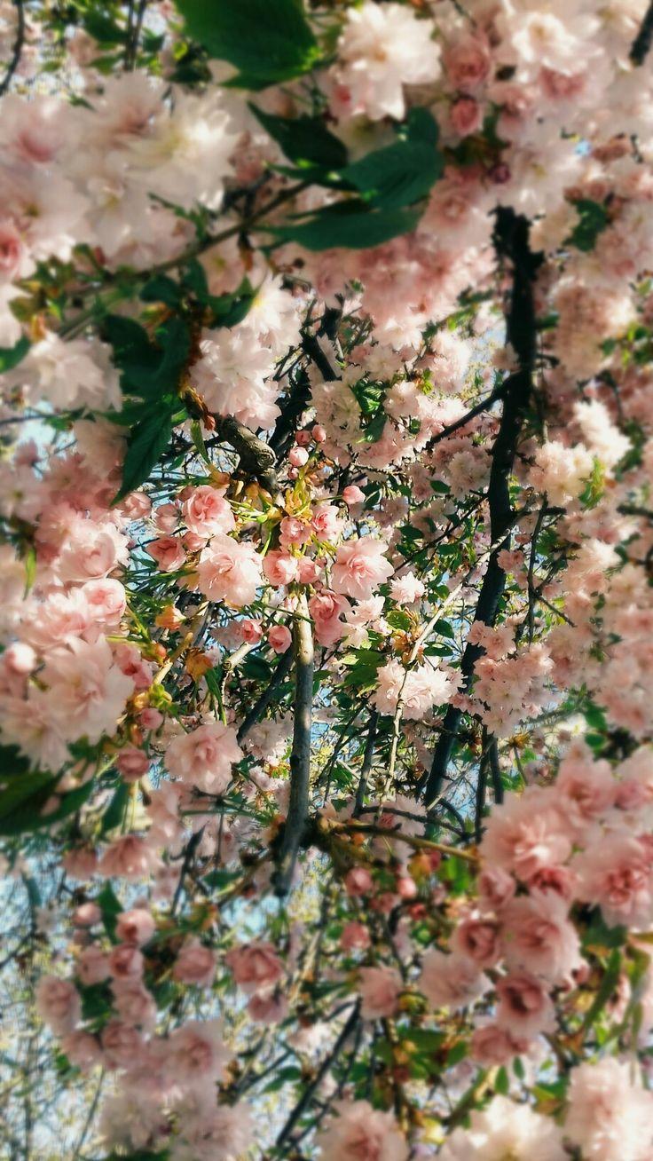Spring is hear/Flowers <3