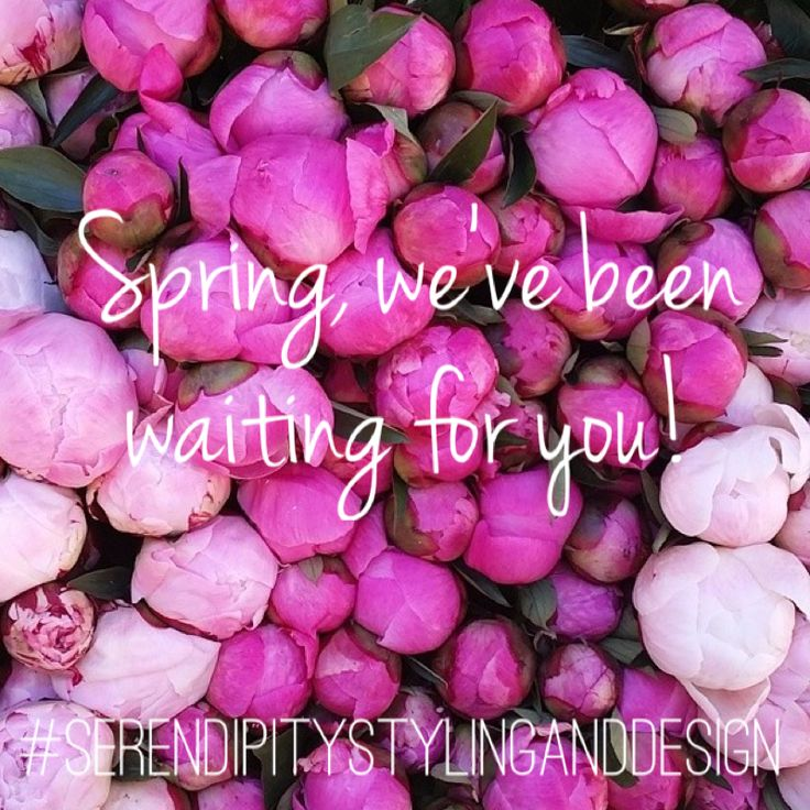 Hello Spring!  #spring #peonies