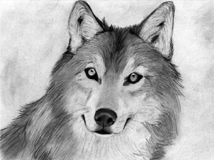 1001 Images Du Dessin Au Fusain Et Les Techniques A Adopter Dessin Au Fusain Dessin Noir Et Blanc Dessin Loup Facile