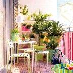 déco balcon avec plantes vertes en pots multicolores