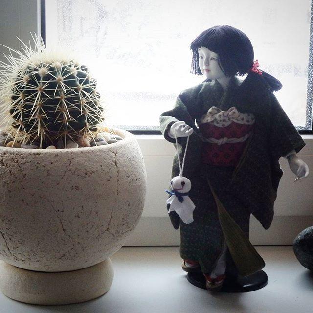 ❤ #hobby #succulents #plants  #artdolls #nice #likeit #суккуленты #хобби #растения #куклы