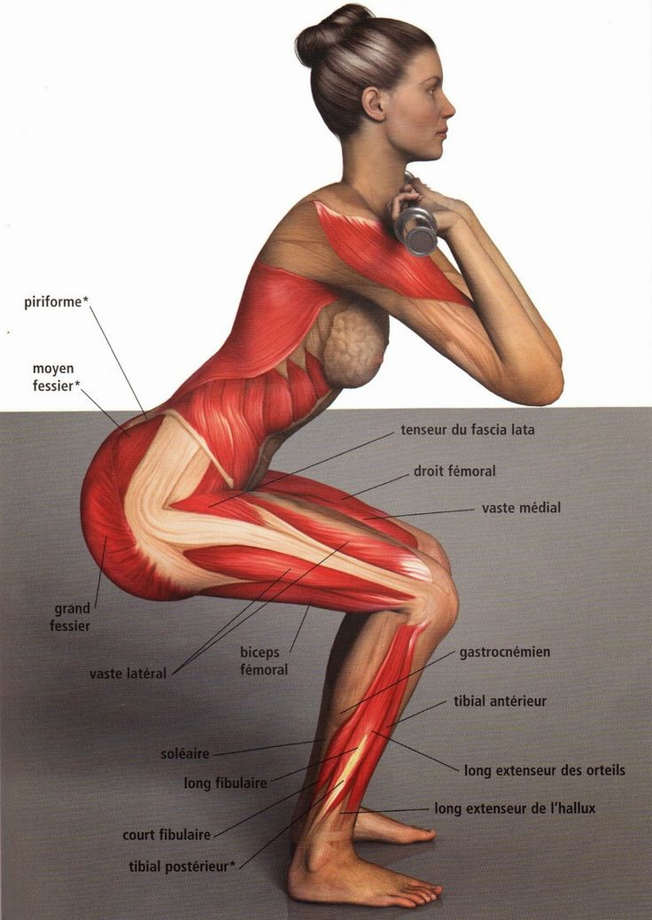 Squat!! Look at ALL the muscles this one exercise targets!!