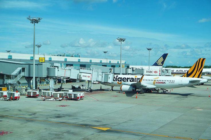 #changiairport #changiairportsingapore #airport #airplane #flight #instaairplane #aircraft #aircraftlovers #airportlife #tigerair #tigerairways #singaporeairlines #singaporeair #singaporeinsiders #sgig #discoversingapore #singapore50 #sg50 #singapore #traveling #traveller #travelgram #instatravel #sojourner #backpacker #solobackpacker #backpackersingapore #exploresingapore by bibirkeriting