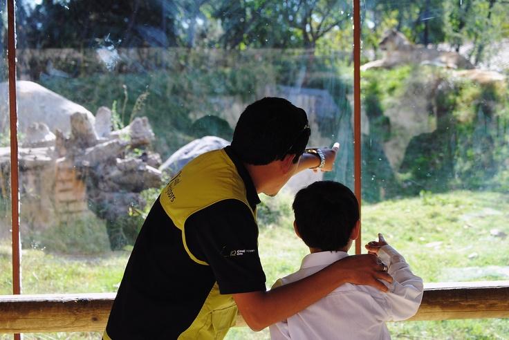 Otra imagen de la visita al Buin Zoo de los niños del Centro de Protección Pudahuel.