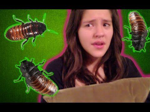 Broma con cucarachas de madagascar a Lesslie   Videos de risa 2013, bromas pesadas, terror - YouTube