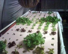 Urban Aquaponics - Floating Raft Construction - All about Rafts