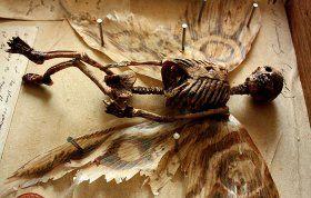 # 1 782 rok  Podivné kostry objavené v pivnici starého domu v Londýne