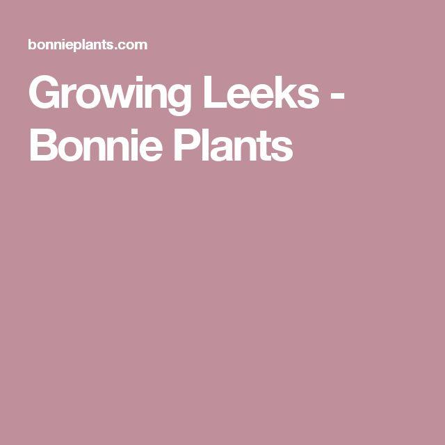 Growing Leeks Bonnie Plants Growing Oregano Growing 400 x 300